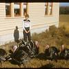 Marilyn McCoy and turkeys, Aneroid, 10/05/1957
