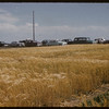 District 3 cars at Experimental Farm Test Plot Day.  Swift Current.  08/05/1957
