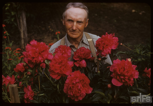 R. P. Robbins (World's Wheat King - 1950) and poenies.  Shaunavon.  06/30/1952