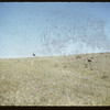 Rine Cree deer.  South Fork.  07/22/1956