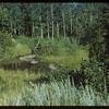 Wood Mountain Creek back of Jimmy Thompson house - also called Mushroom Creek.  Wood Mountain.  08/07/1954