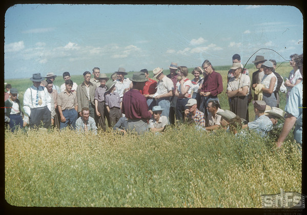 Checking out the oats plots at the Experimental Farm.  Swift Current.  08/19/1954