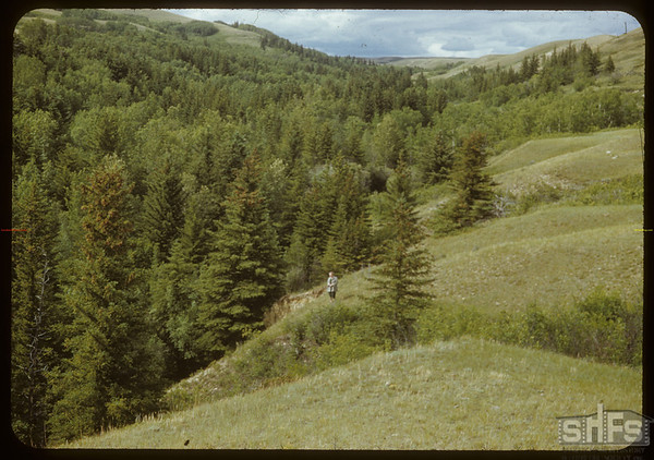 Beatiful S.F. valley.  South Fork.  06/23/1951