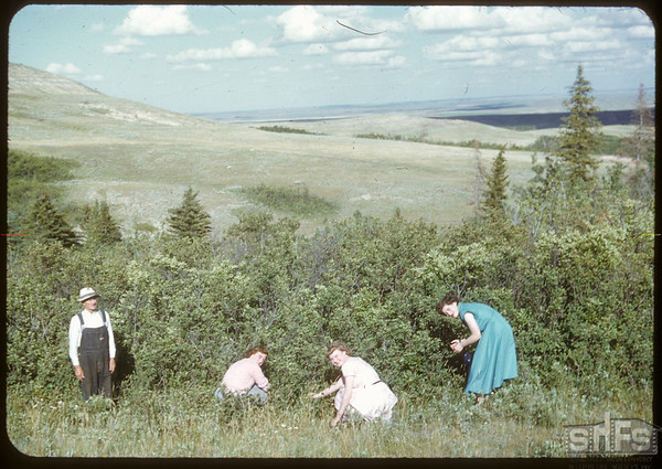 Berry pickers and Henry Willner - 14 miles west of Shaunavon..  Shaunavon.  07/23/1950