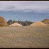 Alex Malone's wheat and barley stored on the ground.  Shaunavon.  09/12/1957