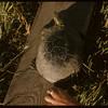 Turtle..  Shaunavon.  08/01/1957