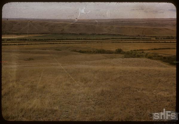 Joe Thomsland field Shelters & Alfalfa.  Simmie.  08/26/1956