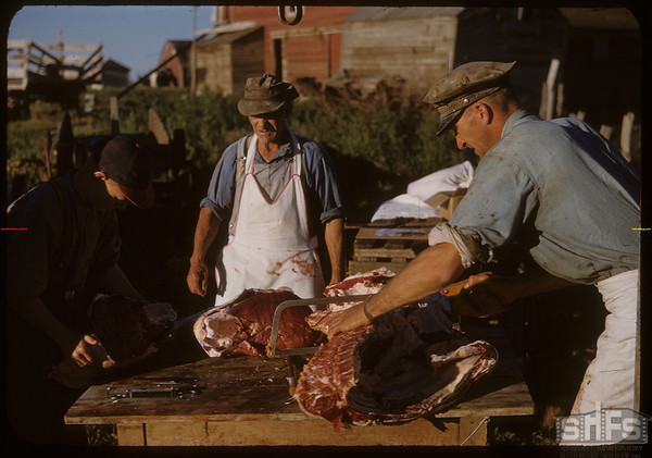 Pioneer beef ring - experienced cutting.  Shaunavon.  08/26/1950