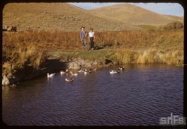 Maurice Dordeau's Ducks - Franz & Jean.  South Fork.  09/28/1952