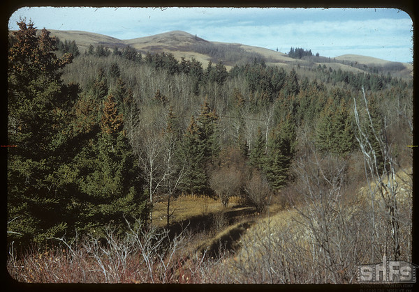 South end of Shaunavon lease.  South Fork.  10/22/1954