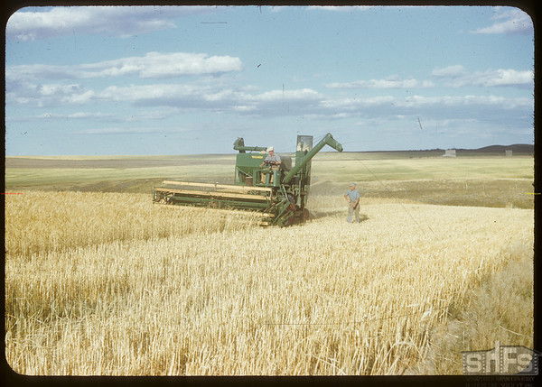 Combining M. Privis's field.  Val Marie.  08/21/1951