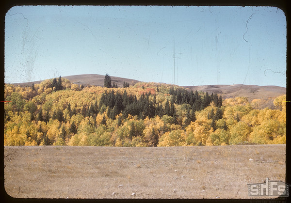 Along the road north of Shaunavon Lease.  South Fork.  09/30/1956