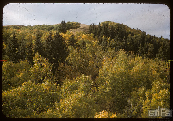 Pine Cree Park from east above road.  South Fork.  09/23/1956