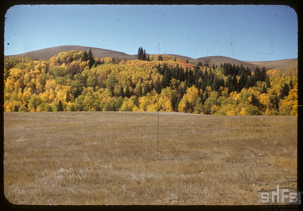 North central area of Pine Cree Park.  South Fork.  09/30/1956