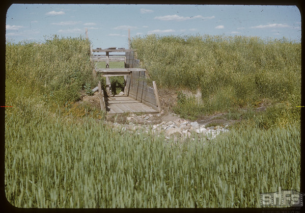 Field Day at Anton Dynneson's Dyke - Dyke Gate.  Shaunavon.  08/02/1950