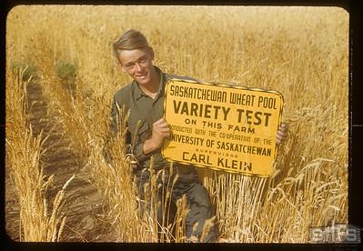 Carl Klein's variety test plot, Admiral, 09/05/1953
