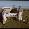 Pioneer beef ring - delivery.  Shaunavon.  08/26/1950