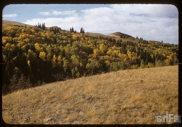 Pine Cree Park from Hilltop Drive.  South Fork.  09/25/1956