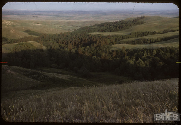 Wooded Area leading into S.F.Valley. S.W. of Shaunavon Lease.  South Fork.  06/27/1954