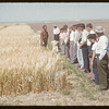 District 3 test plot supervisors.  Swift Current.  08/11/1957