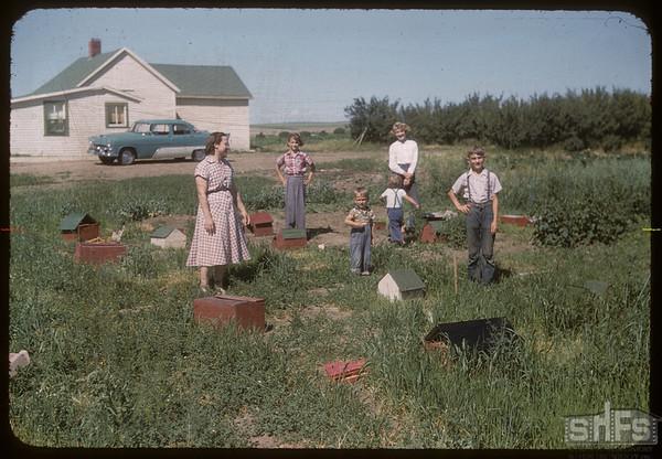 Junior farming at Mike Sand's.  Shaunavon.  07/25/1956
