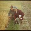 Elmer Anderson's test plot.  Shaunavon.  08/19/1951