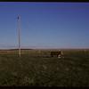 Power line problem - bull walking on power line brace. Orkney. 05/20/1963