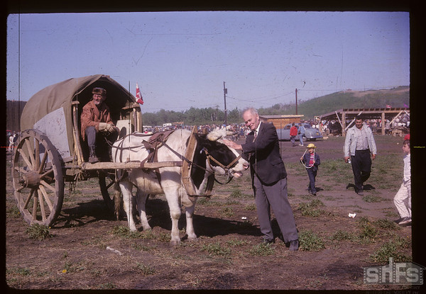 """Everett Baker was there too. Norman Tellier from Lasalle Manitoba & """"Loui"""" [oxen].  [Oxen pulling Red River Cart]. Fort Carleton. 06/06/1967"""