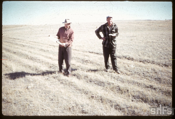Ralph and John Morrison examining trail east of Dry Coulee - like but not NWMP Trail.  [Picture published in Trails and Traces.] Robsart. 09/22/1960.
