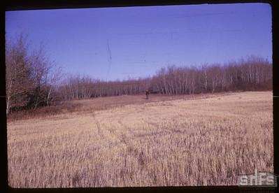 Typical trail thru trees. Alvena. 10/18/1961