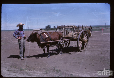 Aneroid's Jubilee parade - Red River Cart Aneroid 07/06/1963