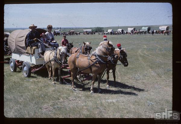 Shetlands - Gravelbourg wagon train.  Mankota.  07/03/1967