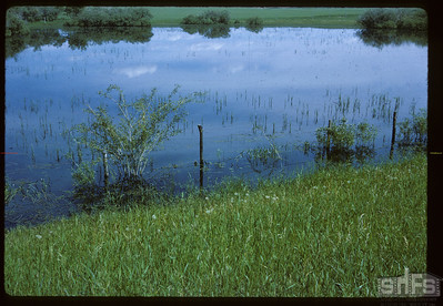 Willow-ringed sloughs near Biggar. Biggar. 06/21/1966