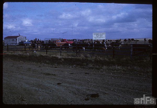 Community Pasture Corrals. Canuck. 05/05/1963