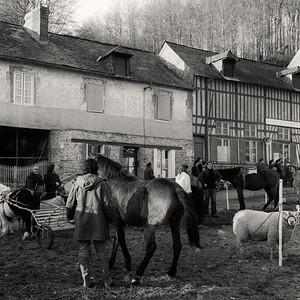 Foire aux bestiaux de Grainville-la-Teinturière (76). Février 1979.