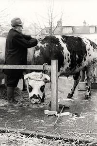 Concours de bestiaux de Lillebonne, 19 mars 1980.