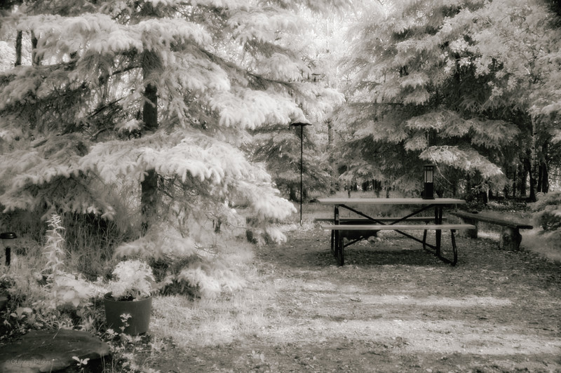 June 9, 2012<br /> <br /> Site 28<br /> <br /> Elk Island Retreat<br /> <br /> * This was my first attempt at Infrared Photography - not exactly what I was hoping for but I like it just the same :) It gives a real ethereal feel to my weekend retreat