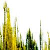 November 18, 2012<br /> <br /> Tree Top Abstract