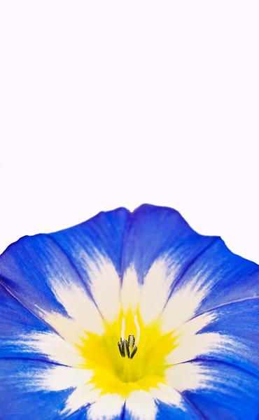 August 29, 2012<br /> <br /> Garden Gift