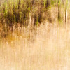 May 25, 2014<br /> <br /> Foliage Abstract<br /> <br /> Elk Island Retreat<br /> Rural Alberta