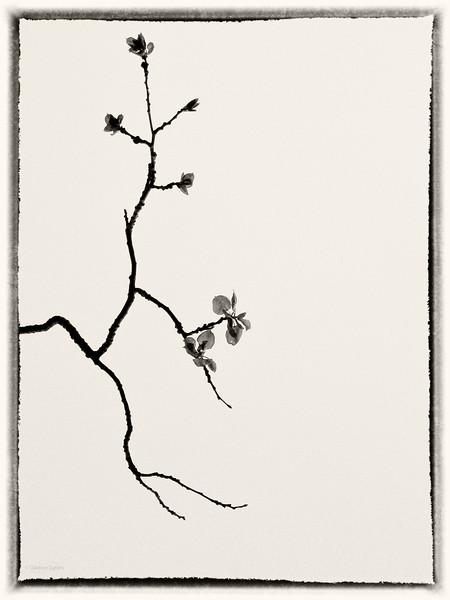 June 6, 2014<br /> <br /> Sprig of Spring