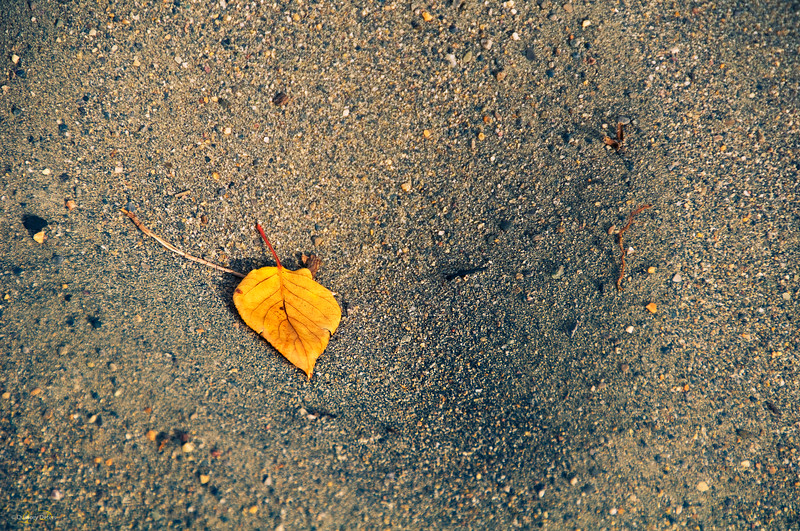 September 22, 2013  Autumn Leaf  Jasper National Park, Alberta  * Today is the first day of fall, one of my favorite seasons!!  <font color=orange><font size=16>HAPPY FALL ALL Y'ALL!!!</font color>