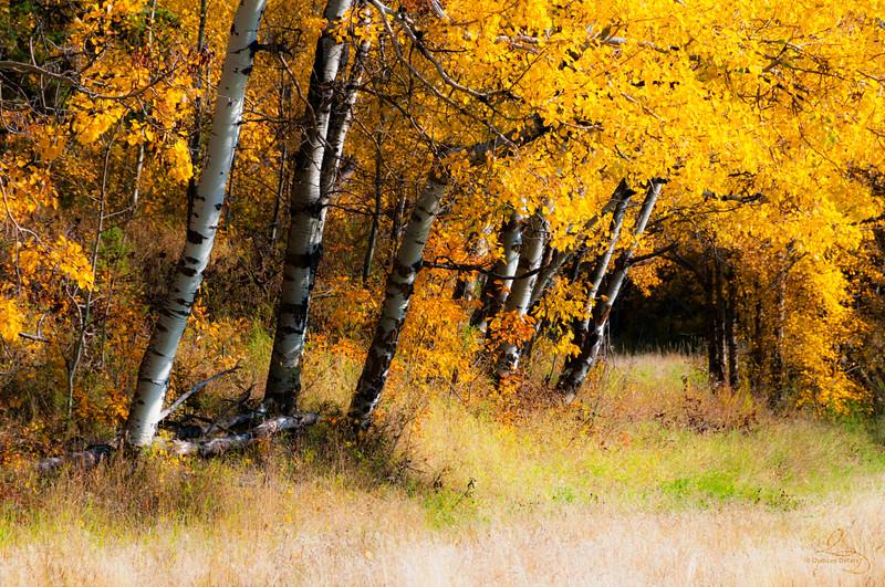 September 29, 2017<br /> <br /> Fall At It's Finest<br /> <br /> Elk Island National. Park, Alberta
