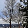 "Day Twenty-Seven<br /> <br /> ""Fresh Snow""<br /> <br /> Edmonton, Alberta"