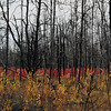 """October 2, 2011  """"Fire & Glory""""  Rural Alberta  * <i>What's In A Name?</i>~ For the month of October I am playing a <i>Name Game</i>. I am challenging myself to use a song title as the image title."""