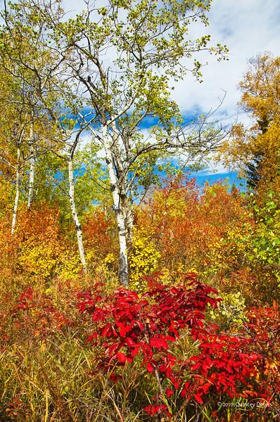 """Day Twenty-Six<br /> <br /> """"Awe-tumn""""<br /> <br /> Elk Island Retreat, Alberta"""