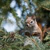 April 22, 2014<br /> <br /> Spring Squirrel<br /> <br /> Elk Island Retreat<br /> Rural Alberta