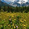 "July 20, 2011<br /> <br /> ""Summer Days""<br /> <br /> Mount Robson, B.C."