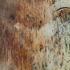 July 8, 2014<br /> <br /> Birchwood<br /> <br /> Texture Tuesday<br /> #texturetuesday