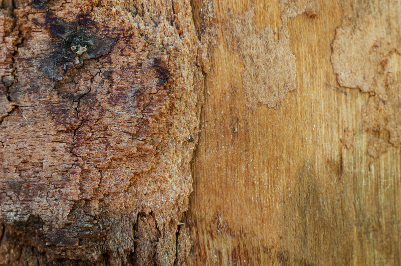 February 3, 2015<br /> <br /> Birch Wood<br /> <br /> #TextureTuesday